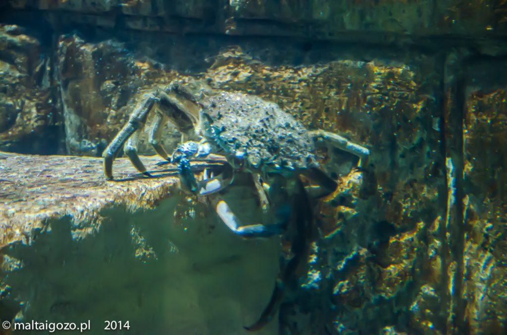 malta nurkowanie