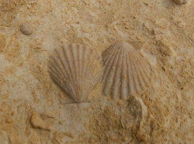 skamieliny na gozo