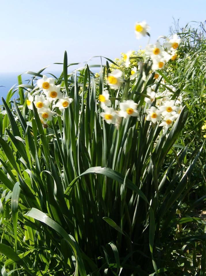 wiosna na malcie
