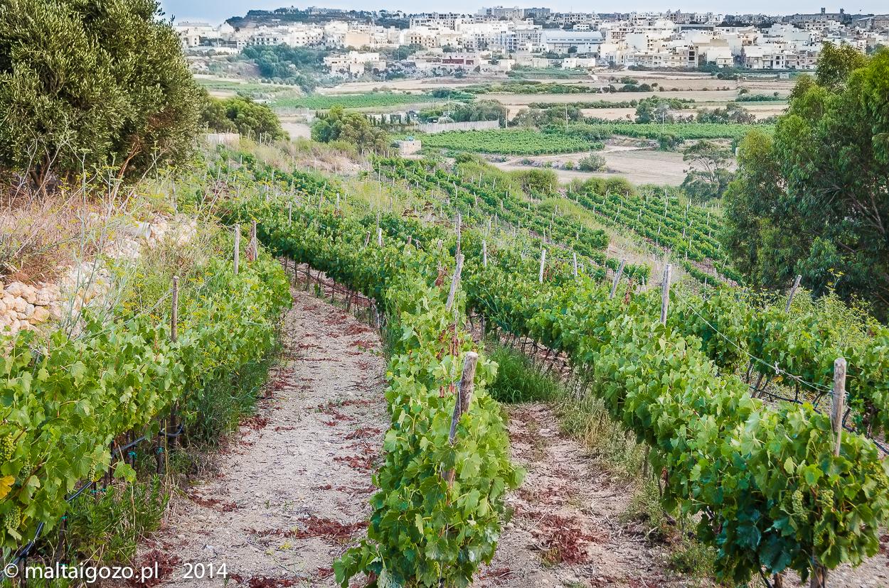 Degustacja win Malta i Gozo