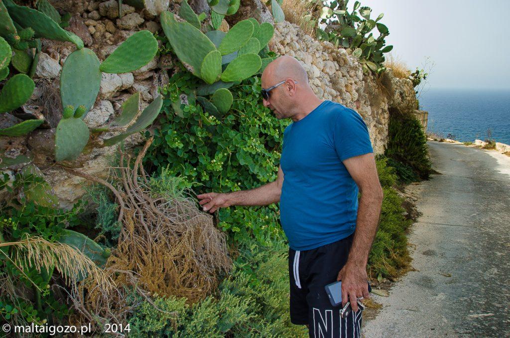 Philip Spiteri_the amazin lover of Gozo-0184