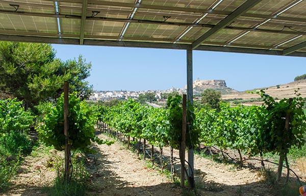 winnica Gozo