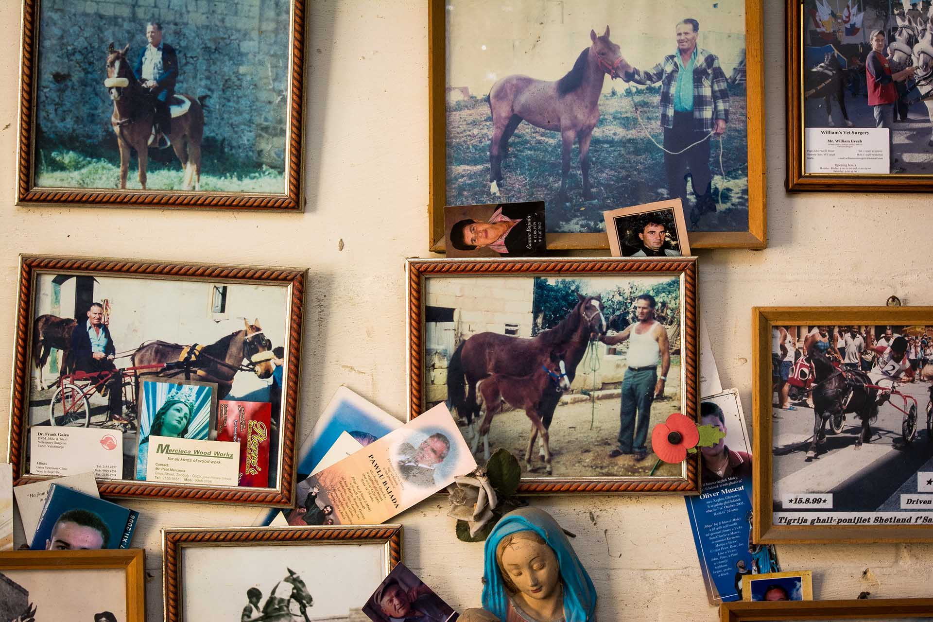 Gozo konie
