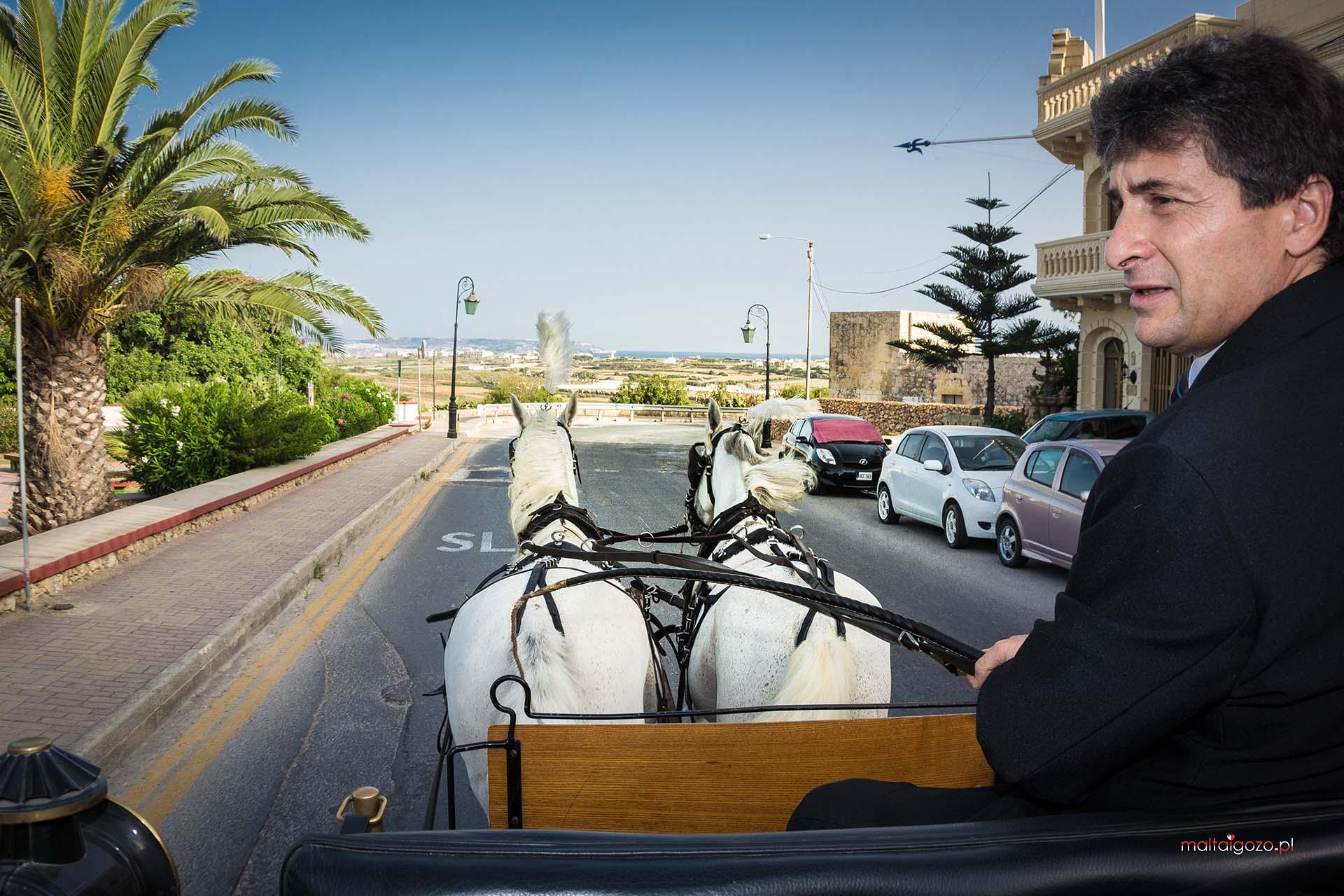 Konie na Gozo