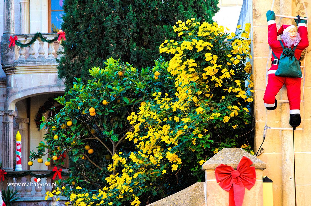 Boże Narodzenie Malta