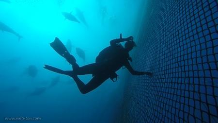 Nurkowanie na Farmie Tuńczyków